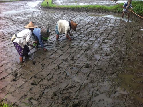 farmlaborers